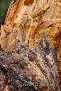 Wood bark brown orange texture.