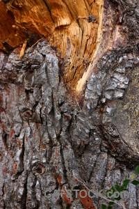 Wood bark orange texture brown.