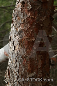 Wood bark texture.