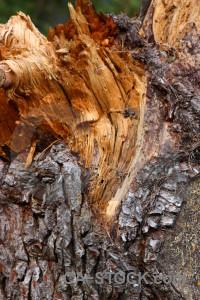 Wood bark texture brown orange.