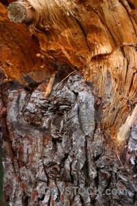 Wood brown orange bark texture.