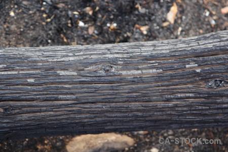 Wood europe texture bark javea.