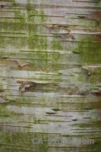 Wood green texture bark.