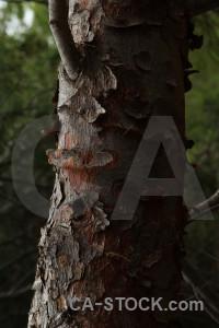 Wood green texture bark black.