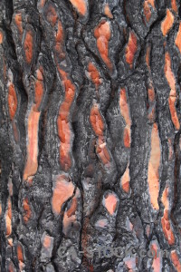 Wood spain europe javea burnt.