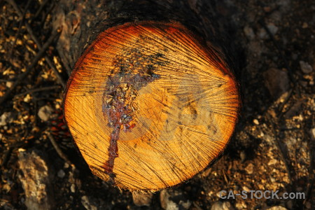 Wood spain texture circle javea.