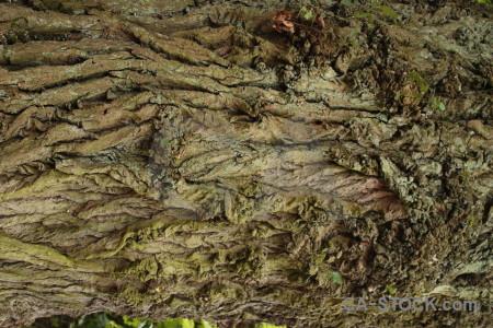 Wood texture bark.