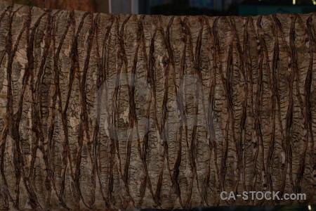 Wood texture bark brown.