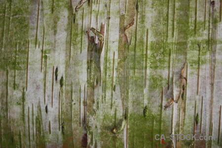 Wood texture bark green.