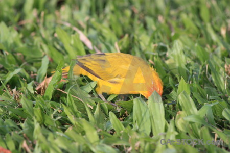Yellow bird orange green animal.