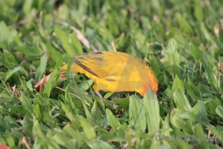 Yellow bird orange green animal.