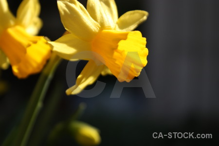 Yellow flower plant orange.