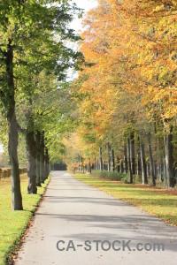 Yellow green tree path orange.