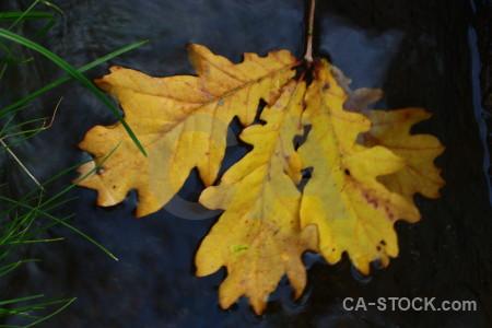 Yellow orange leaf.