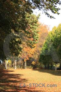 Yellow orange tree green path.
